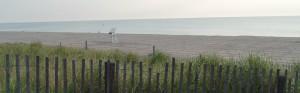 Bethany Beach turtle walk